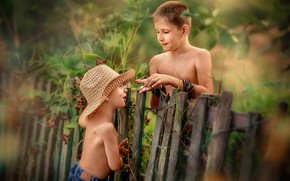 Picture nature, children, the fence, boys