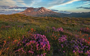 Picture the sky, grass, the sun, clouds, flowers, mountains, the evening, meadow, USA, National Park, Mount …