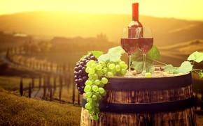 Picture leaves, the sun, landscape, wine, bottle, glasses, grapes, Italy, tube, barrel, bokeh, Tuscany