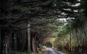 Picture road, forest, nature