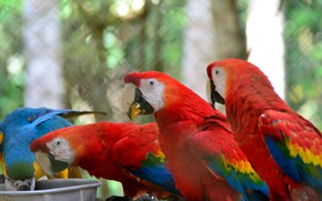 Picture birds, stay, feathers, parrots