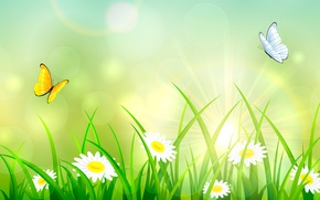 Picture summer, grass, butterfly, chamomile