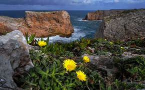 Picture sea, flowers, nature, rocks, Portugal