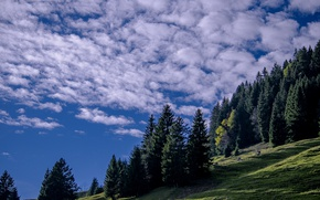 Picture the sky, clouds, trees, slope