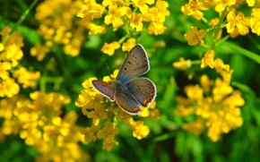 Picture Macro, Flowers, Nature, Spring, Butterfly, Nature, Flowers, Spring, Macro, Butterfly