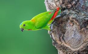 Picture birds, tree, parrot