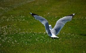 Picture Nature, Grass, Bird, Seagull, Nature, Grass, Seagull
