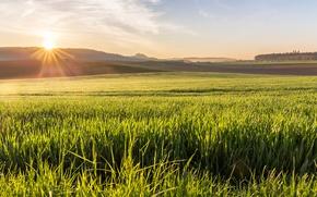 Picture field, grass, the sun, sunrise, morning