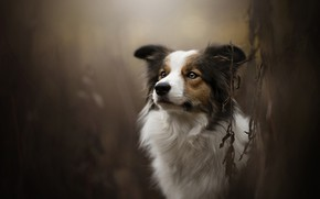 Picture dog, bokeh, Theia, Dog Photography