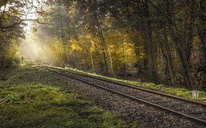 Picture forest, light, railroad