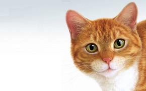 Picture cat, minimalism, Pussy, ginger, Eric Tranchefeux