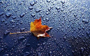 Wallpaper macro, water drops, water, background, maple leaf, leaf, drops