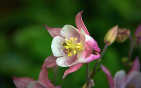 Picture Macro, Drops, Flower, Flower, Macro, Drops