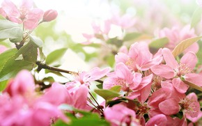 Picture tree, Flowers, spring, flowering
