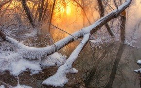 Picture winter, forest, water, the sun, snow, trees, fog