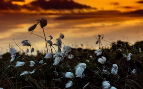Picture sunset, flowers, nature