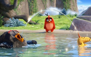 Picture cinema, Red, bird, lake, school, movie, film, animated film, Angry Birds, animated movie, Bomb, Chuck, …