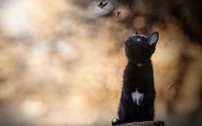 Picture butterfly, kitty, bokeh, black kitten