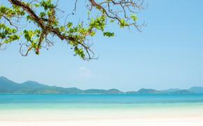 Picture sea, beach, summer, tropics, tree
