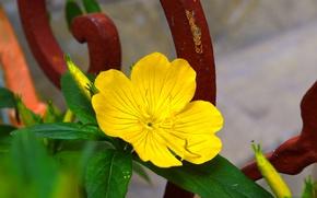 Picture Macro, Macro, Yellow flower, Yellow flower