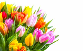 Wallpaper bouquet, tulips, white background