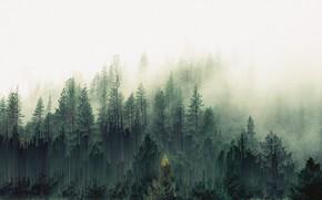Picture Fog, Forest, Art, Pixels