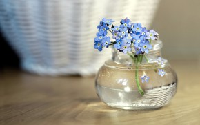 Picture tenderness, forget-me-nots, jar