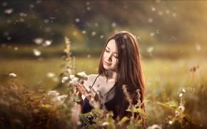 Wallpaper girl, face, mood, hair, meadow, fuzzes, Vadim Miller