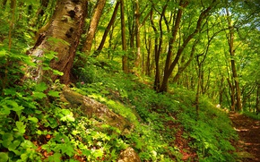 Picture Spring, Trees, Forest, Trail, Spring, Forest, Trees