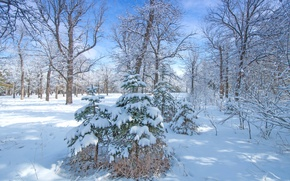 Picture winter, forest, snow, trees, Park, tree, spruce