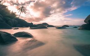 Picture sand, sea, stones, palm trees, coast