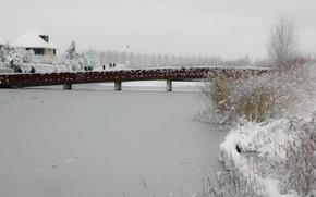 Picture Winter, Snow, Pond, Park, Ice, Frost, Winter, Frost, Park, Snow, Ice, The bridge, Pond