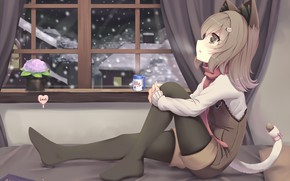 Picture anime, girl, kitty