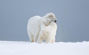Picture bear, child, motherhood, love, background, snow, wild, pose, bear, white, Mishutka, fooling around, Arctic, scene, …