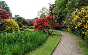 Picture trees, flowers, pond, lawn, garden, track, UK, the bushes, Biddulph Grange Garden