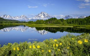 Picture summer, flowers, mountains, meadow