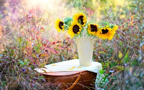 Picture grass, sunflowers, nature, basket, vase, bokeh