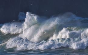 Picture wave, birds, storm, the ocean, seagulls, The Atlantic ocean