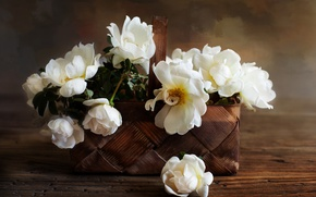 Picture roses, basket, white roses