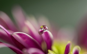 Picture flower, drop, petals