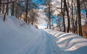 Wallpaper winter, snow, trees, road