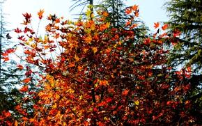 Picture Tree, Autumn, Leaf