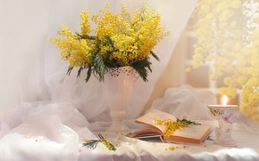 Picture bouquet, book, Mimosa