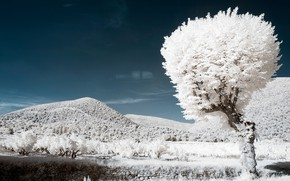 Picture mountains, tree, France, infrared the, Ventral