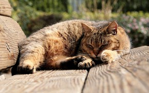 Picture sleeping, tabby cat, on the bench