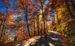 Wallpaper forest, autumn, the sun, leaves, moss, trees, road, mountains, slope, Canton of Berne, Switzerland, Thun