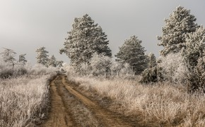 Picture winter, frost, road, trees