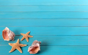 Picture Shell, Background, Starfish