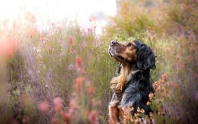 Wallpaper summer, nature, dog