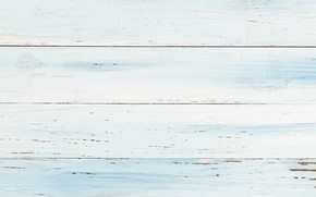 Picture white, background, tree, blue, texture, white, wood, texture, background, light blue